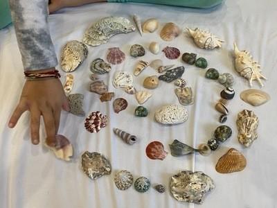 Cropped landscape lg 400 spiral shells