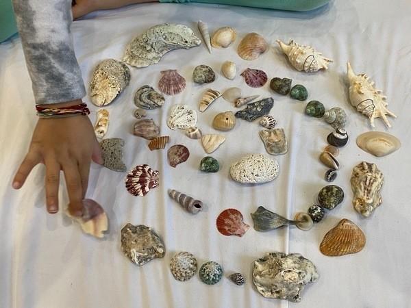 Cropped landscape lg 600 spiral shells