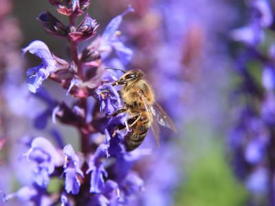 Cropped landscape lg 400 bee