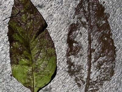 Cropped landscape lg 400 img 1734