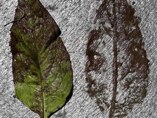 Cropped landscape lg 600 img 1734
